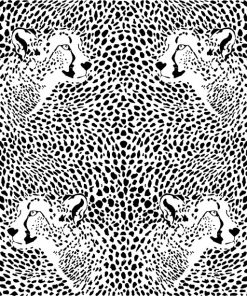Cheetah Skins and Heads